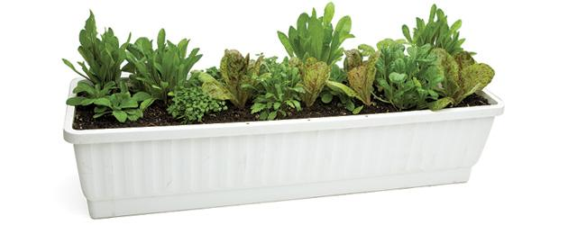 Short on space? Container gardening may be for you! Image via Eating Well